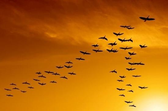 Những cánh chim trời